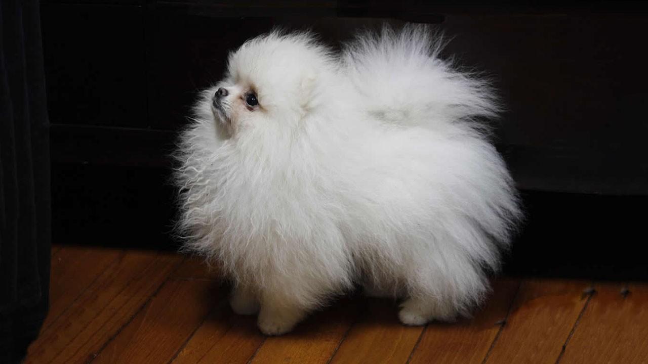 Entrate potete dirmi il nome di questa razza canina for Nomi per cani maschi taglia piccola