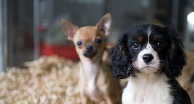 Negozio cuccioli di cane a Bari