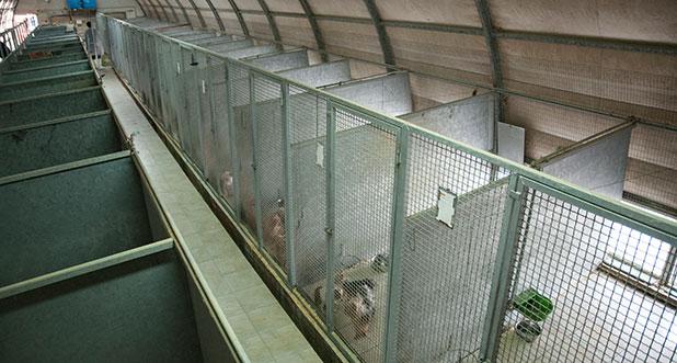 Sala Parto Per Cani : La cucciolata presa sul serio parte quinta il parto ti